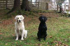 2 dogs in garden